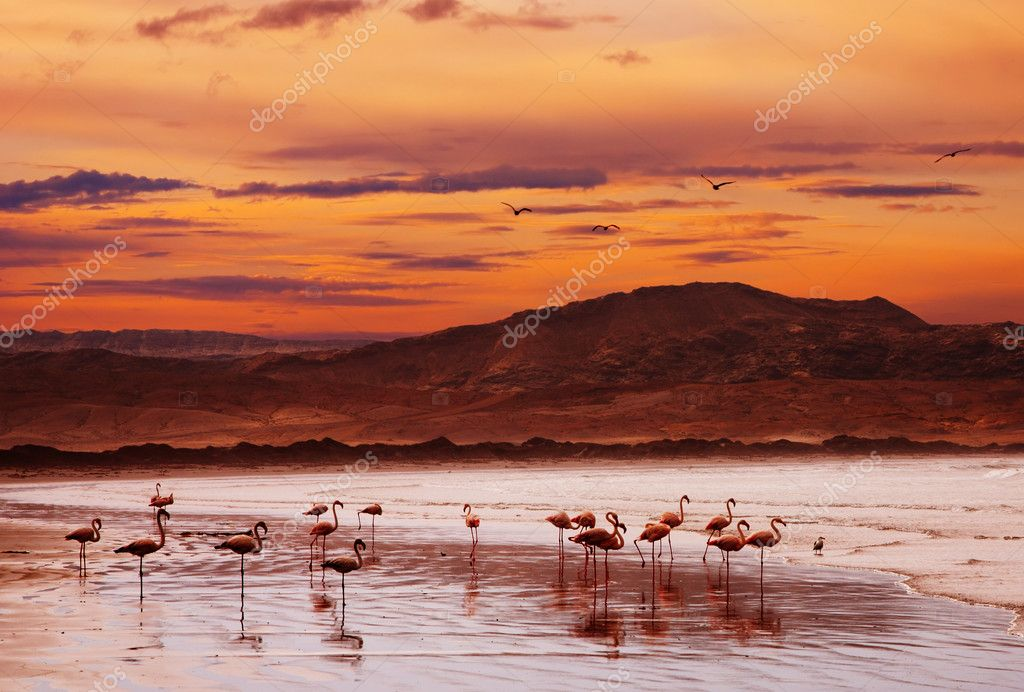 Flamingo on the beach, Atlantic coast of Namibia — Stock Photo #1703857