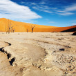 Namib Desert - Photo