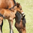 Mare and foal - Stock Photo