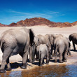 Elephants — Stock Photo #2297381