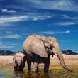 Stock Photo: Elephants at watering