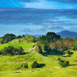 New Zealand landscape — Stock Photo