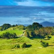 Foto Stock: New Zealand landscape