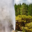 Stock Photo: Lady Knox Geyser, New Zealand