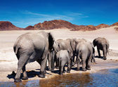 Elephants — Stock Photo