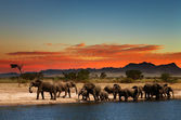 Herd of elephants in african savanna — Stok fotoğraf