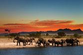 Herd of elephants in african savanna — Stock Photo
