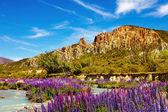Clay Cliffs, New Zealand — Foto de Stock