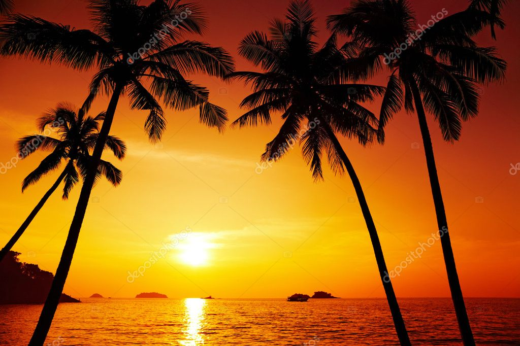 Palm trees silhouette at sunset, Chang island, Thailand  Foto de Stock   #2300097