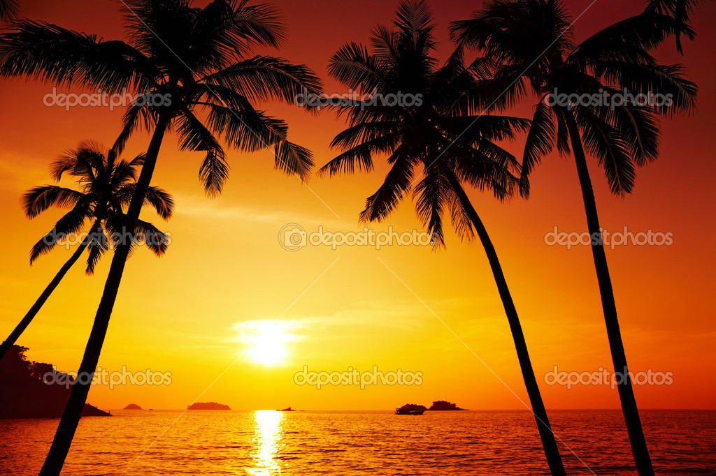 Palm trees silhouette at sunset, Chang island, Thailand — Foto de Stock   #2300097