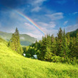 Rainbow over forest — Stock Photo