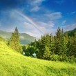 Rainbow over forest — Stock Photo #2548011