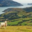 新西兰风景 — 图库照片