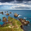 Nugget Point, New Zealand — Stok fotoğraf