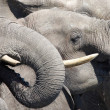 Drinking elephants — Stockfoto #2676899