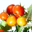 Tomatoes — Stock Photo #1654521