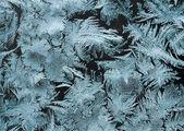 Winter tale — Stock Photo