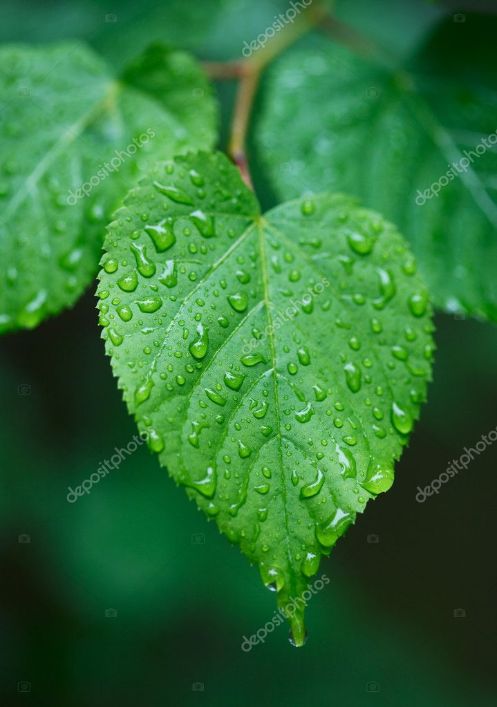 Green heart shaped leaf with rain droplets — Stock Photo #1654546