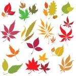 Set of vector floral design elements — Stock Vector