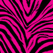Zebra background - Stock Vector