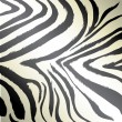 Royalty-Free Stock Vector Image: Zebra