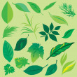 Set of leafs — Stock Vector