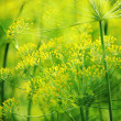 Stock Photo: Green dill close-up photo
