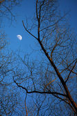 Moon among of tree branches — Stock Photo
