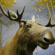 Stock Photo: Close-up photo of elk head