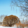 Winter landscape — Stock Photo #2071894