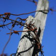 Barbed wire — Stock Photo #2377748