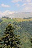 Mountain's landscape in Abkhazia — Foto Stock