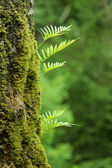 Nurseling fern leaves — Stock Photo