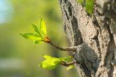 Verdant sprout — Stock Photo
