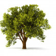 Stock Photo: 3d summer tree