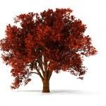 3d autumnal tree — Stock Photo #2571583