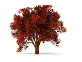 3d autumnal tree — Stock Photo