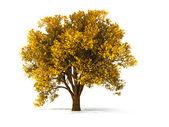 3d autumnal tree — Stock Photo