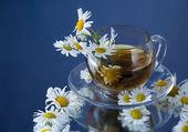 Tea and Chamomile — Stock Photo