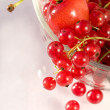 Red berries — Stock Photo