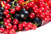 Currant berries — Stock Photo
