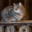 Cute tabby kitten laying on wooden railing — Stok fotoğraf