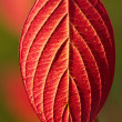 Autumn red leaves — Foto de Stock