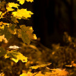 Autumn yellow leaves — Stock fotografie