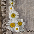 Meadow daisies on a background of linen — Lizenzfreies Foto