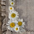 Meadow daisies on a background of linen — Stok fotoğraf