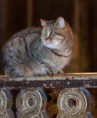 Cute tabby kitten laying on wooden railing — Stock Photo