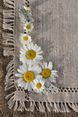 Meadow daisies on a background of linen — Stock Photo