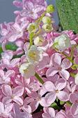 Lilac — Stock Photo