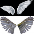 Stock Photo: Two wings